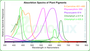 Absorption Spectra of Plant Pggments