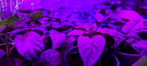 Photobiology in Agriculture