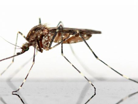 How to kill a mosquito